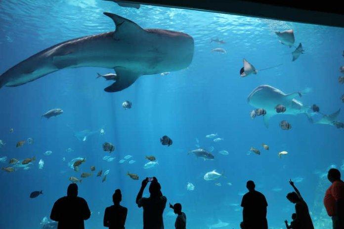 Costly Aquarium's
