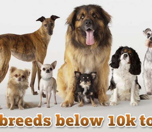 Dog Breeds below 10k