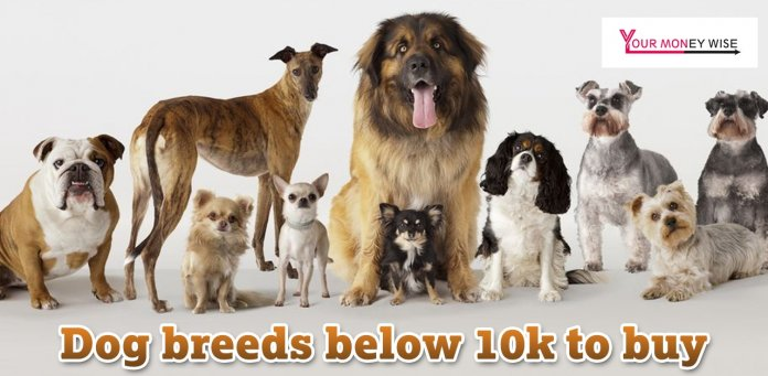 Dog Breeds below 10k