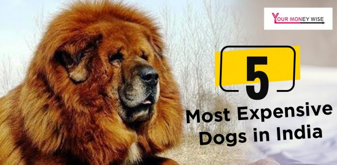 Most Expensive dogs