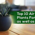 air purifying plants for bedroom