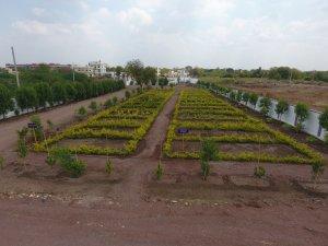 Vegetable garden at Mount Litera Zee School, Kalaburagi
