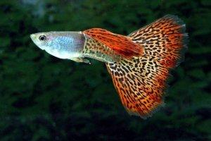 acquarium fish